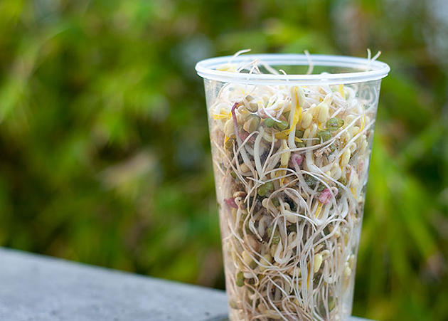 Bean Sprouts How to grow - Bean Sprouts at home