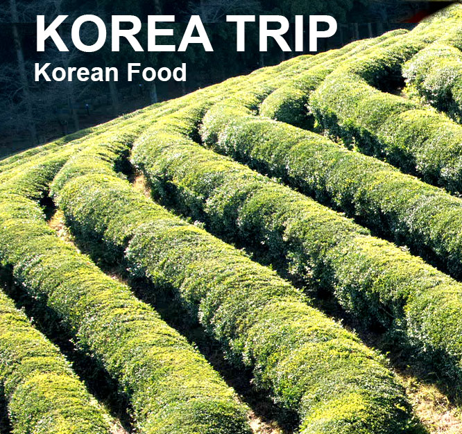 Korea Travel EP6 – Matcha Tea field & Bamboo forest-Jeolla province Korea